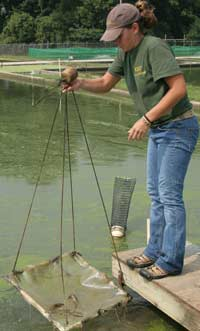 Student Nets Prawns from pond