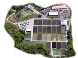 Aerial photo of aquaculture research center